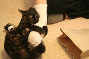 Shelli sock of death