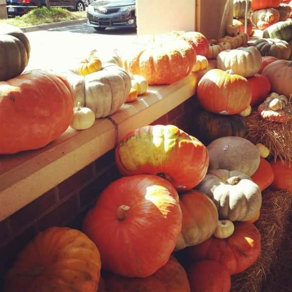 pumpkins, gourds, fall, Trader Joe's